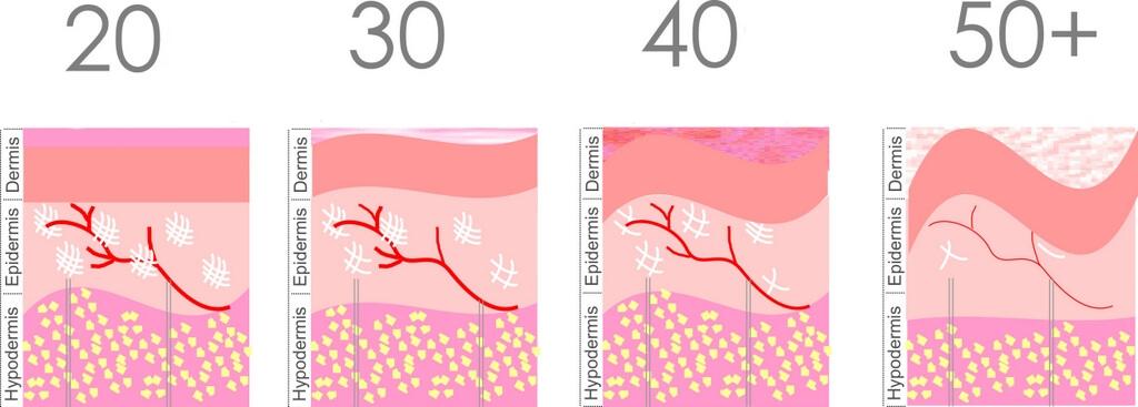 Co se děje v kůži, když stárne